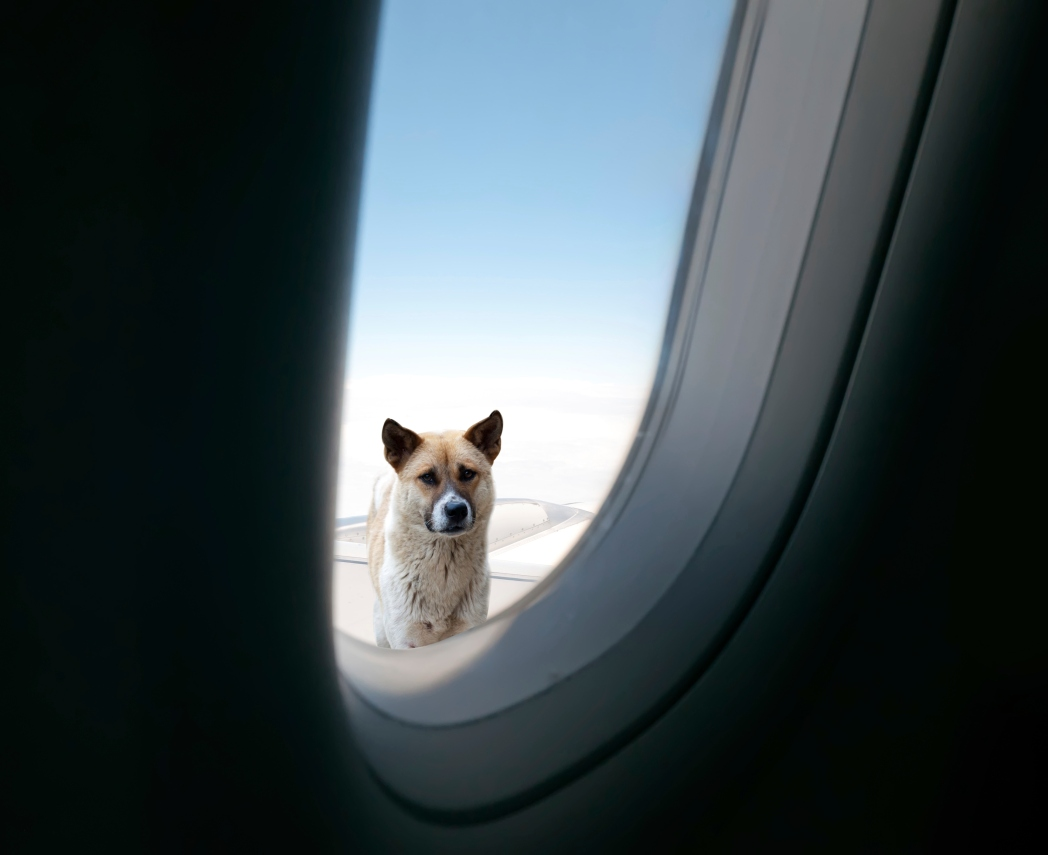 Aircraft window with dog