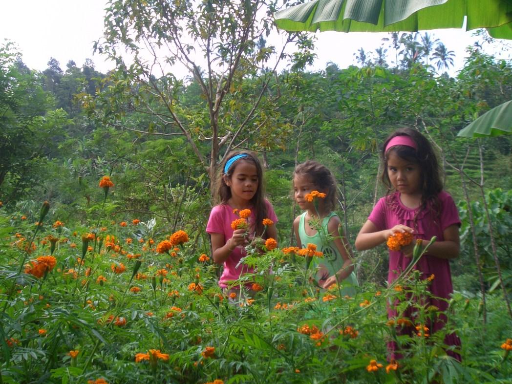 Organic Farm Bali